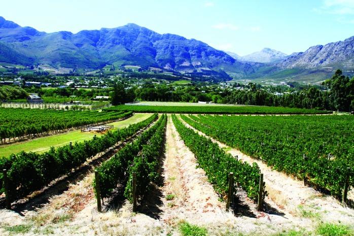 Cape wine lands